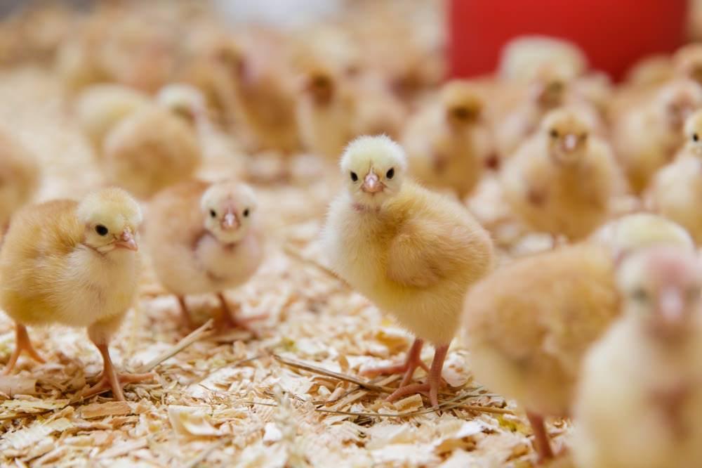 photographe reportage agriculteur exploitation volailles magasin producteurs