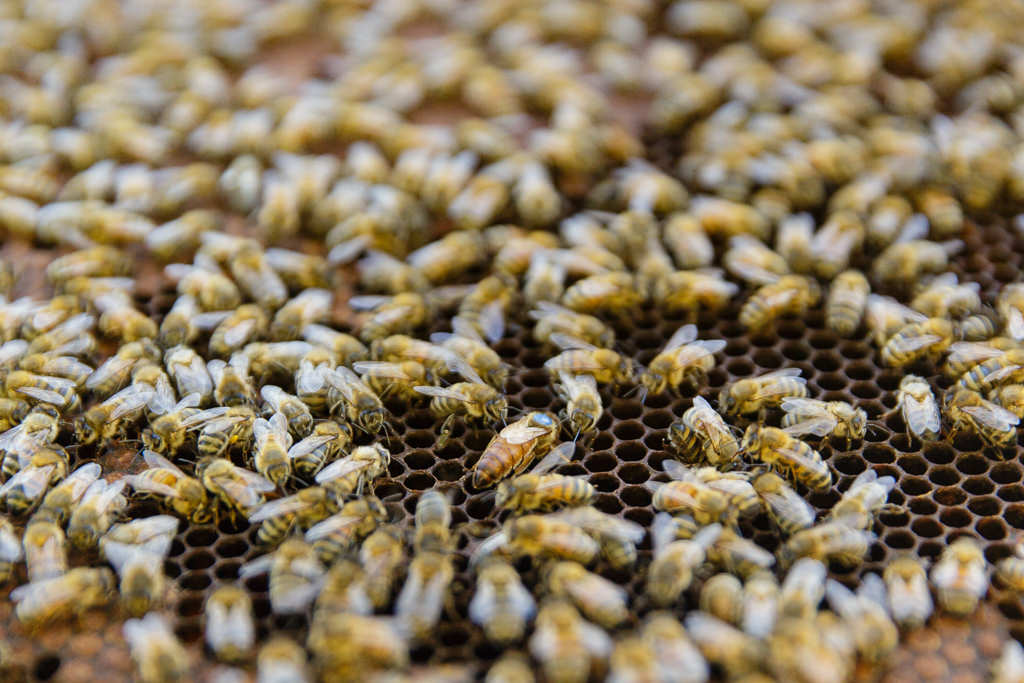 reportage metier apiculteur gresivaudan